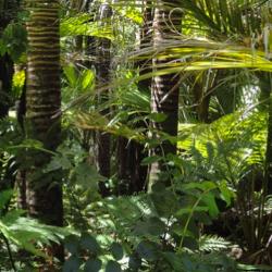 Brésil : La Cour suprême soutient une loi controversée sur l'environnement
